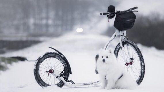 A kutyák immunerősítése